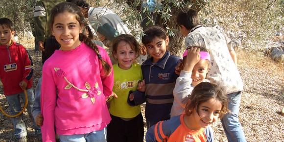 palestinian-olive_main