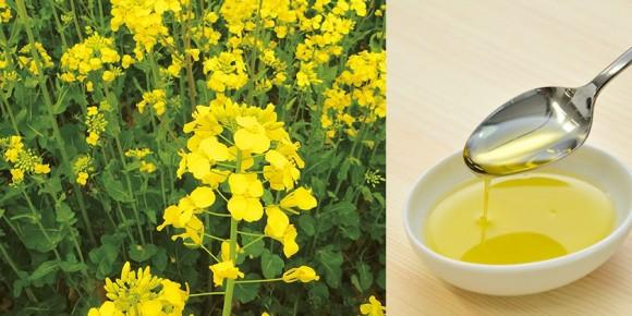 shinsai-3-years-green-oil_main