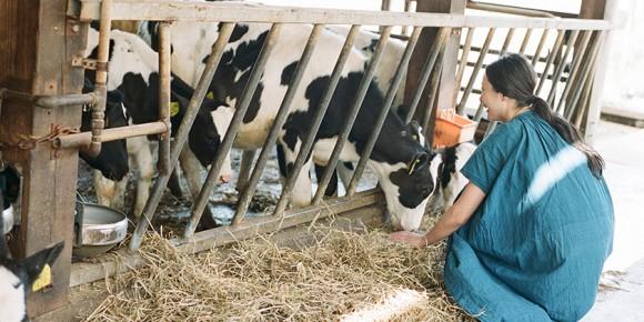 牛舎で牛を見る菓子研究家の長田佳子さん