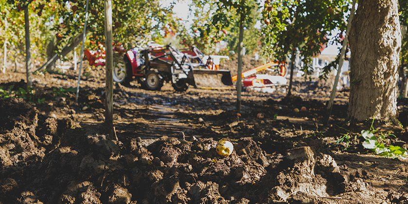 一面に泥が積もったりんご畑