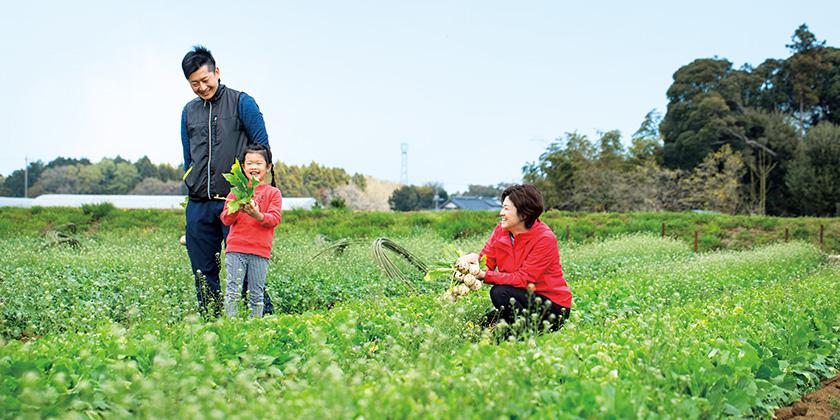 収穫した野菜を手に畑の間の道を歩く親子収穫した野菜を手に畑の間の道を歩く親子