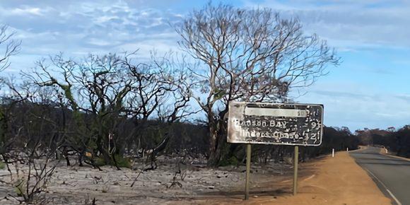 道路標識は黒こげになり、道路の両脇にも黒焦げの木が延々と広がる