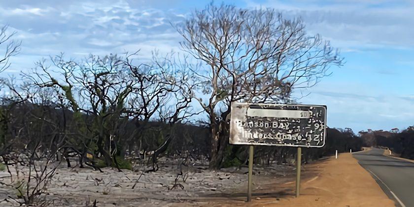 道路標識は黒こげになり、道路の両脇に黒焦げの木が延々と広がる。